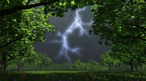 forest storm 2