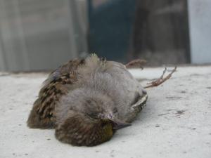 Sparrow 3