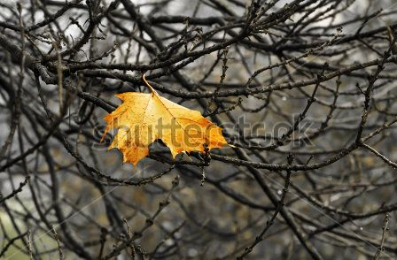 autumn tree with leaf