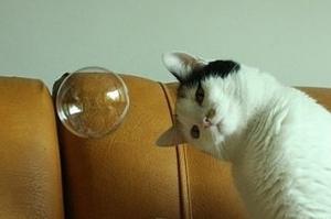 fascinated cat