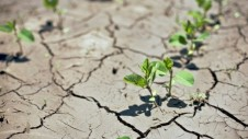 Crop-yield-trends-insufficient-to-feed-the-world-in-2050-Study_strict_xxl