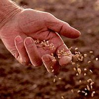 Reconnecting For Lent — Seeds (Day 23)