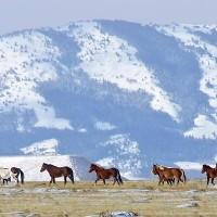 ten horses