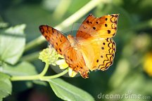 butterfly-broken-wing-24550038
