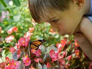 800px-Cute_boy_face_with_butterfly