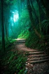 fascinating-photographs-of-forest-paths-to-another-world-20