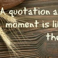 Life Quotes -- Shannon L. Alder