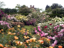 Small Rose Garden Ideas #Picture1 - VentGarden.com
